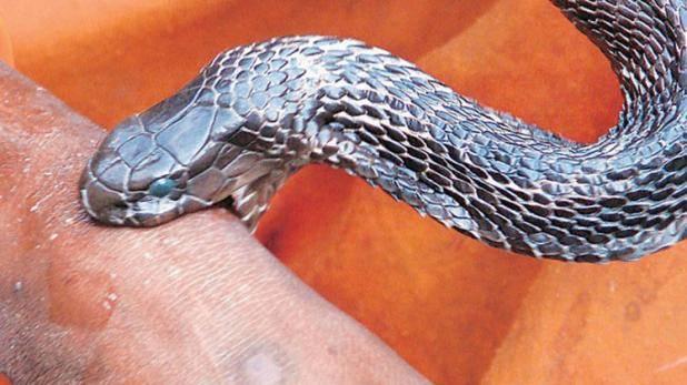 snake-bite_QMkEvqzCMw