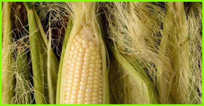 10-Amazing-Benefits-Of-Corn-Silk-5