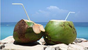 coconut-768x437