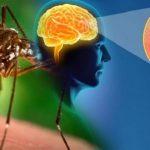 mosquito-768x422